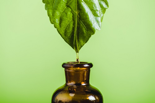 A leaf dripping oil into a bottle.  Essential oils for sensitive skin.